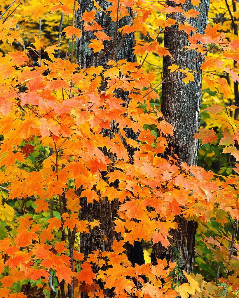 12 Things I Love About Fall